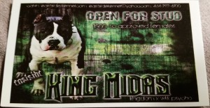 King Midas Eastside Kennel