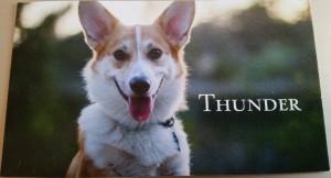 Thunder Corgi