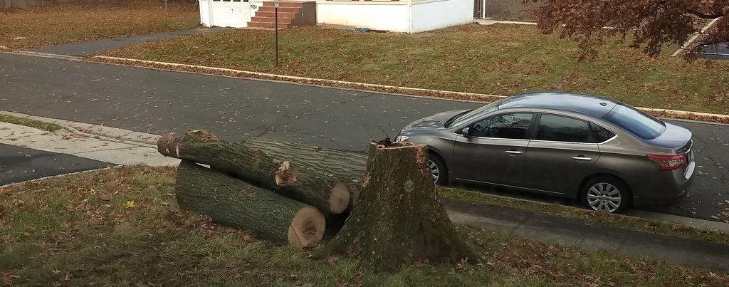 Tree Removal South Plainfield NJ